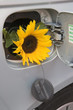 Sunflower in car fuel tank - Bio-fuel concept