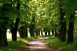 Fototapeten,natur,landschaft,gasse,romantisch