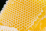 honeycomb macro detail