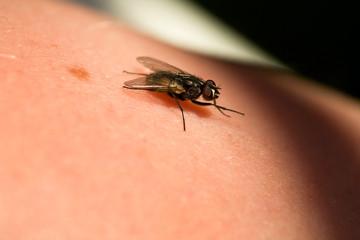 A fly crawling on skin macro