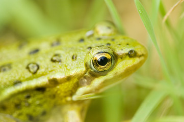 Closeup of frog in the field