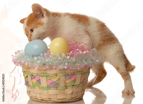white and orange kitten and an easter basket