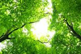 Fototapety green leaves background in sunny day
