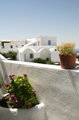 santorini greek island cyclades architecture flowers over sea