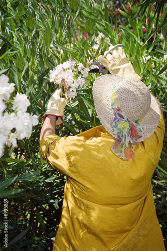 Rear view of senior woman pruning flowers in garden