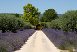 Fototapety House  in the Provence, southern France