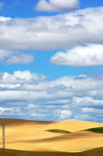 Leinwanddruck Bild Wheat fields and Pretty sky