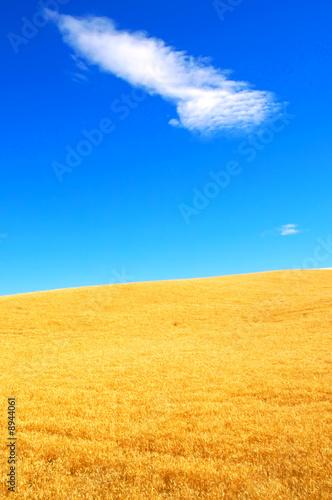 Leinwanddruck Bild Wheat fields and Bright Skies