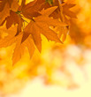 roleta: autumn leaves, very shallow focus