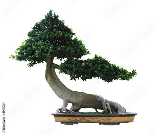 Fotobehang Bonsai Bonsai détouré sur fond blanc