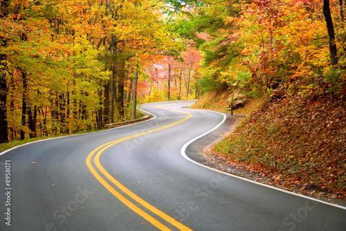 Leinwandbilder,straßen,winding,highway,wald