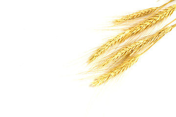 some wheat isolated on white..