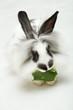Leinwanddruck Bild Small funny rabbit with leaf..