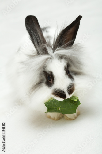 Leinwandbild Motiv Small funny rabbit with leaf..