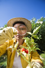 Senior woman looking at tomato with magnifying glass