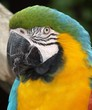 Bright Macaw Parrot upclose