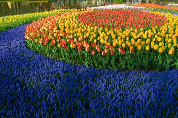 tulipcircle