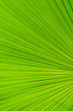 Texture background of palm leaf with backlighting poster