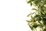 décoration florale - olivier
