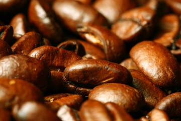 coffee beans macro close up