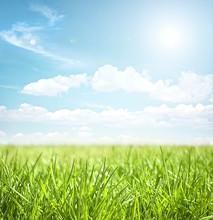 "Постер, картина, фотообои ""sky and grass"""