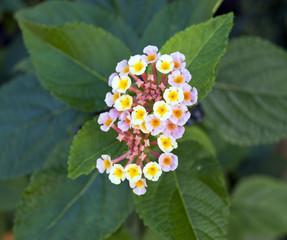 Flowers Nine