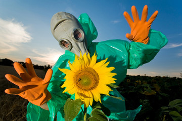 Man in a respirator on sunflower field