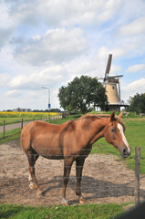 Brown horse in front of a Dutch landscape