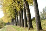 Herbstliche Idylle poster