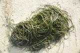 alga poster