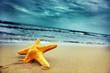Quadro Starfish on the tropical beach