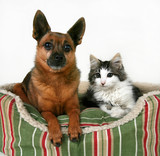 a dog and a kitten in a pet bed poster