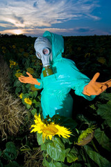 An image of a man in gas mask on sunflower field