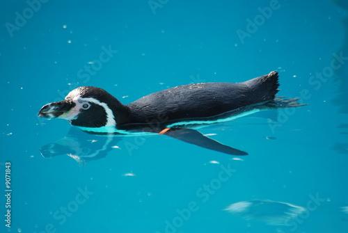 Papiers peints Pingouin manchot