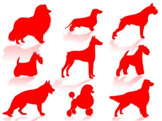 Cani in silhouette