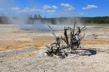 The scenery of Lower Geyser Basin in Yellowstone poster