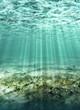 roleta: underwater, ocean floor