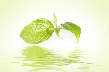 fresh green twig