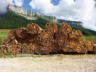 stock de bois en montagne
