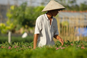Horticulteur au vietnam
