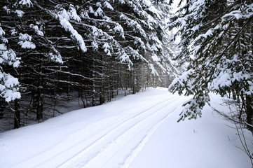 Winter landscape with snowy trees and snowmobile path