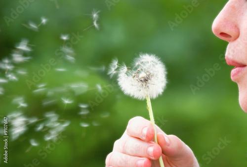 Dandelion Blower