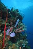 underwater coral reef scene poster