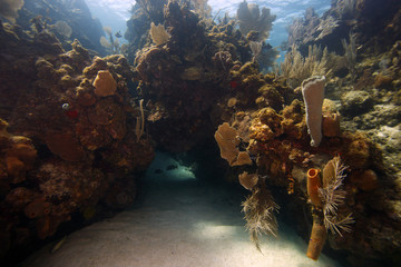 Underwater coral reef scene