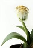 strange magic flower poster
