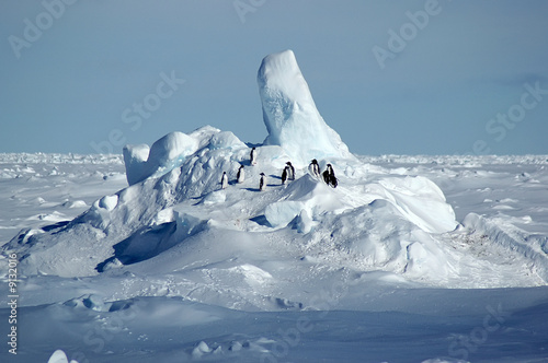 Penguin group in Antarctic pack ice scenery