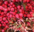 Detail of Organic Radishes at Farmers Market