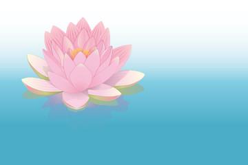 fleur de lotus rose posée sur l'eau