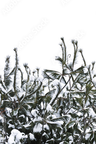 poster of Winter tree branches covered with fluffy snow