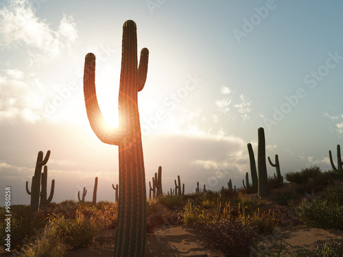 An illustration of a desert with cactus in Arizona